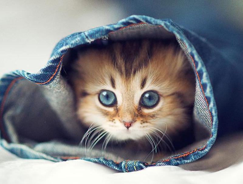 'Music for cats', el proyecto que promete cambiar la vida de tu gato