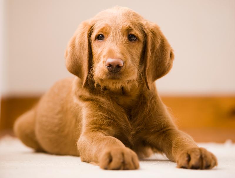 Siempre que puedas adopta, hay muchos perros que necesitan una familia.