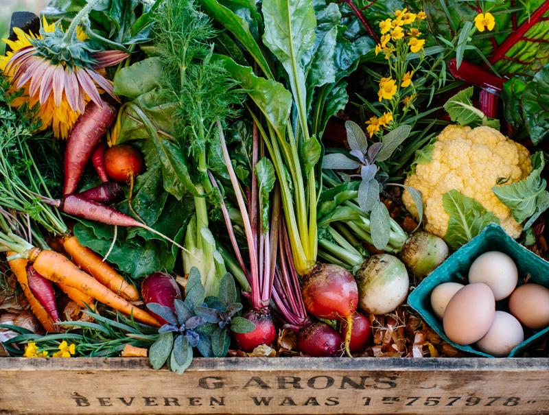 Grupos de consumo ecológico: cómo formar parte de uno y cambiar tu modo de alimentarte