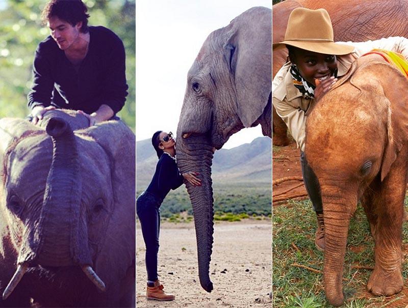 elefantes famosos solidaridad