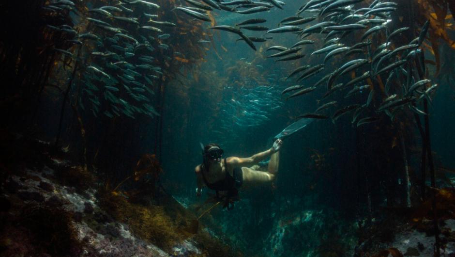 «Respiramos gracias al océano»: siete lecciones sostenibles que nos han dado los mayores expertos en la conservación del mar