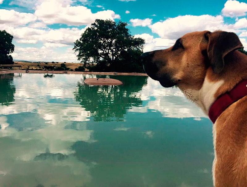 As es la primera piscina para perros de madrid s moda for Piscina para perro