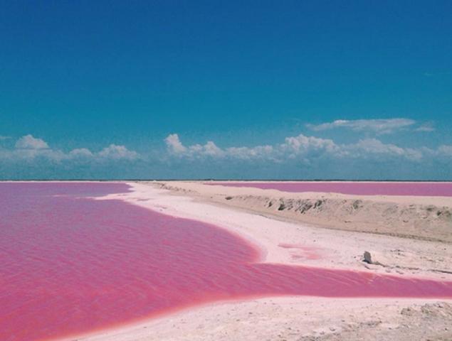 Este lago rosa es el lugar más 'instagrameable' del mundo ...