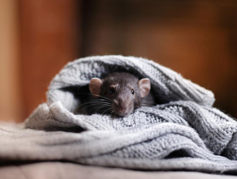 Una mujer demanda a Zara por encontrarse un ratón cosido a su vestido