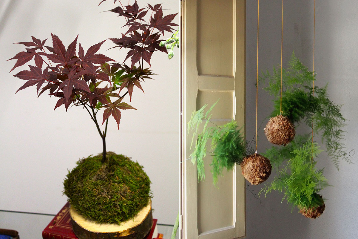Kokedama la alternativa japonesa para decorar tu casa con for Plantas de colgar de interior