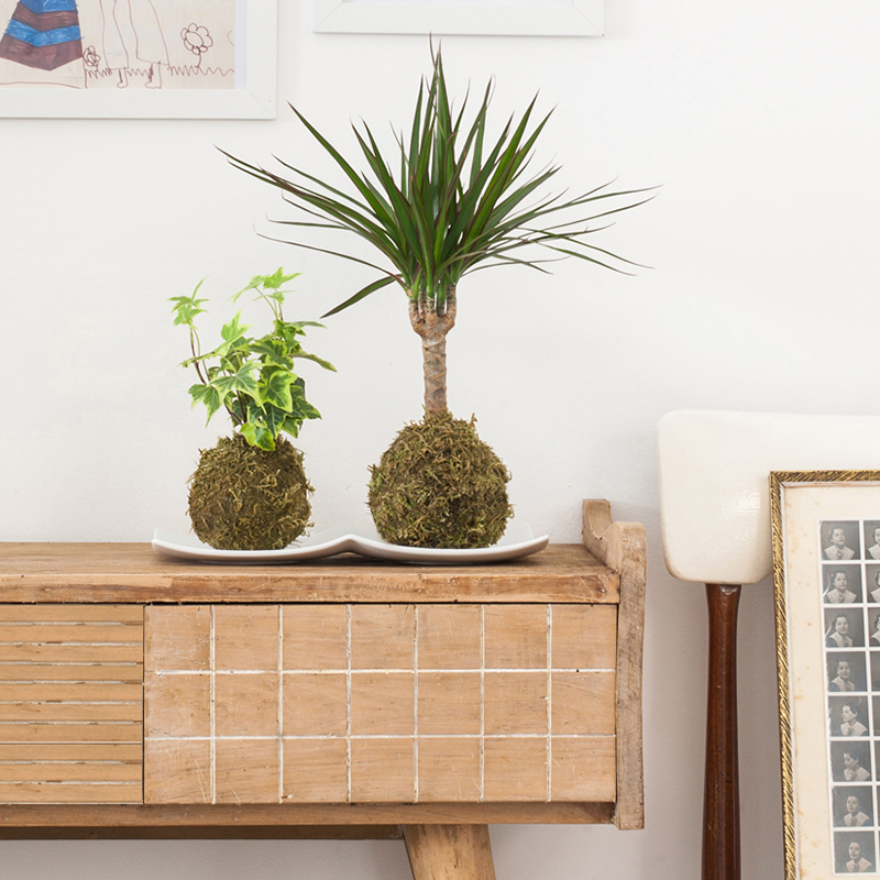 Kokedama la alternativa japonesa para decorar tu casa con for Casas decoradas con plantas de interior