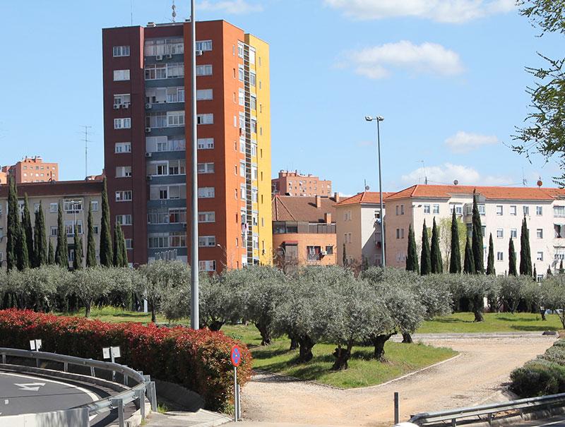 Nace el primer aceite hecho con los olivos de las rotondas de Madrid
