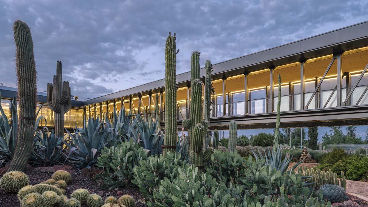 39 desert city 39 el jard n de cactus m s grande de europa llega a madrid placeres s moda el pa s - Jardin de cactus madrid ...