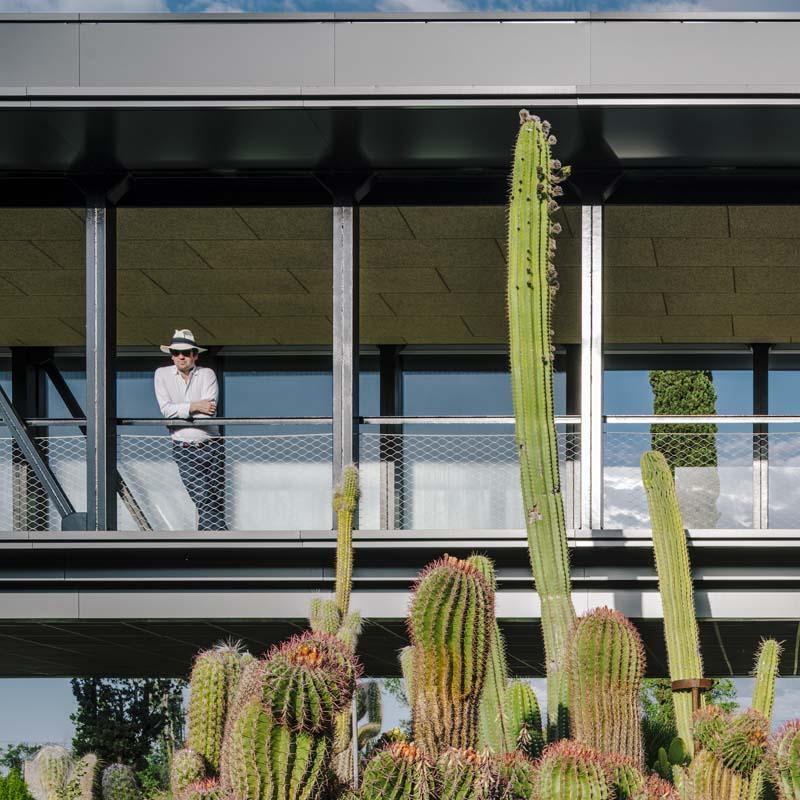 Desert City cactus madrid