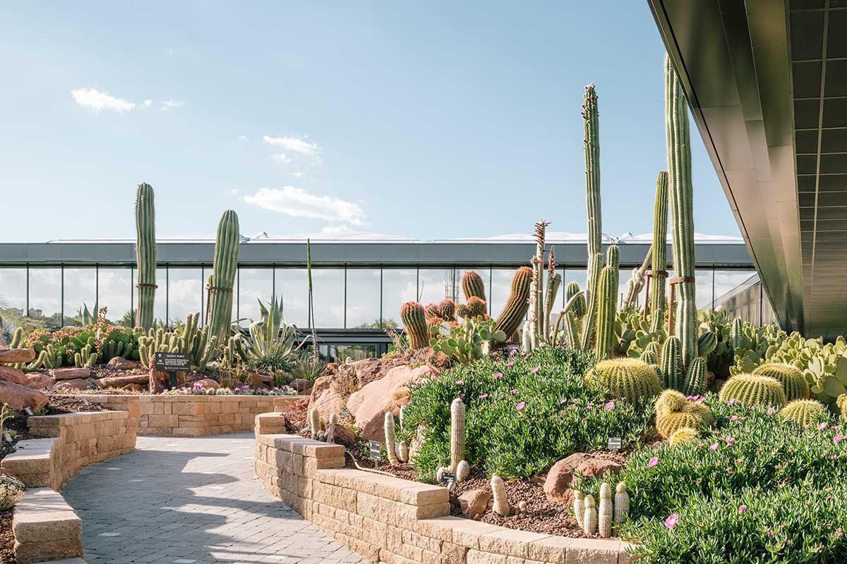 39 desert city 39 el jard n de cactus m s grande de europa