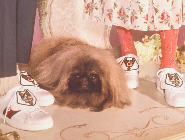 Gucci celebra el año del perro chino con una colección especial