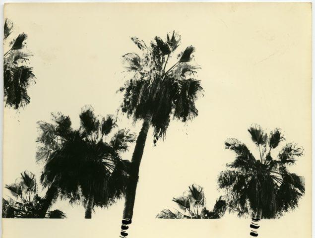 Arte a la sombra de las palmeras