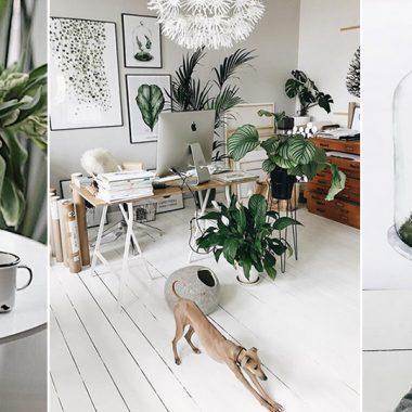 plantas casas