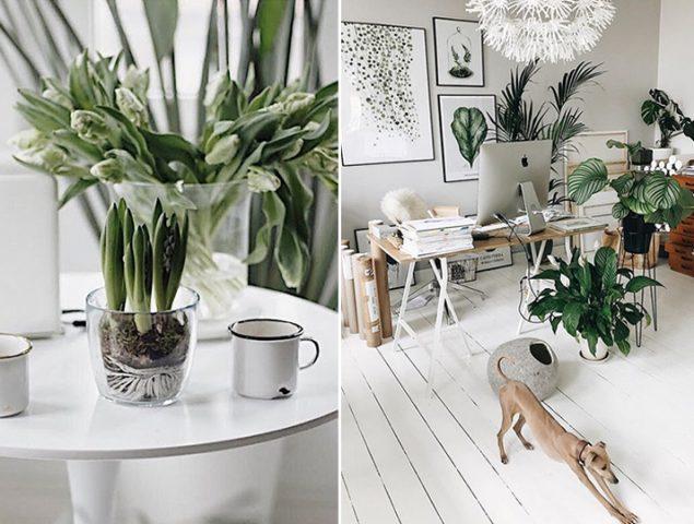 Locos por las plantas: la naturaleza invade las casas