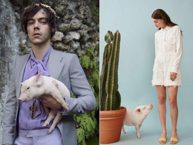Atiende, vuelve el cerdo como mascota favorita de la moda