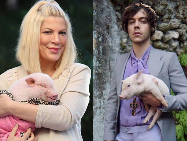 La extraña fascinación de los famosos por los cerdos