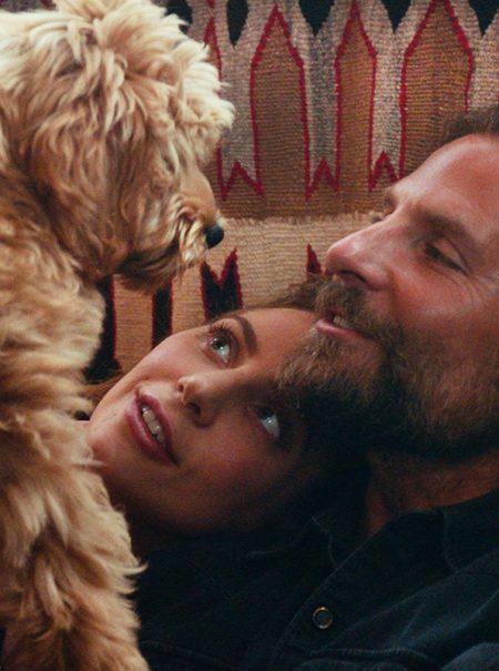 El gran rival de Bradley Cooper para ganar el Oscar es su propio perro