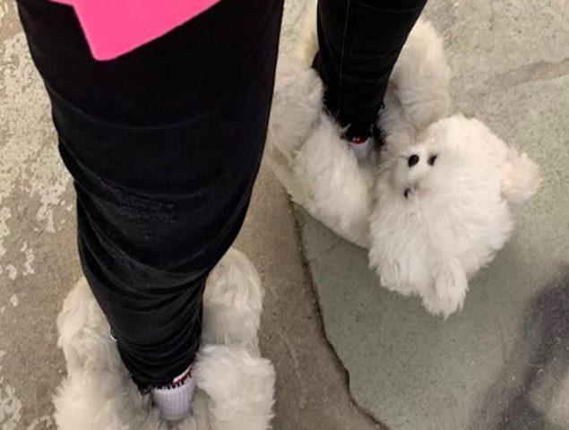 Estas zapatillas de osos de peluche cuestan 700 euros y están agotadas