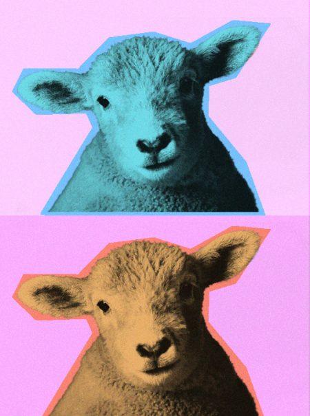 Cómo saber si tus jerséis vienen de ovejas felices: la dramática historia de la lana moderna