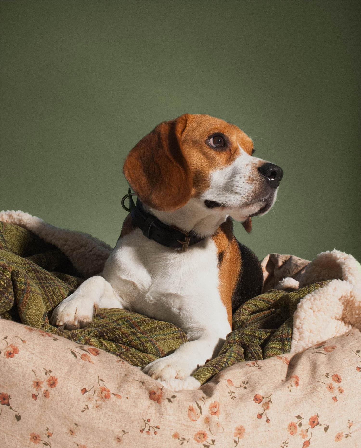 Mascotas en Zara Home