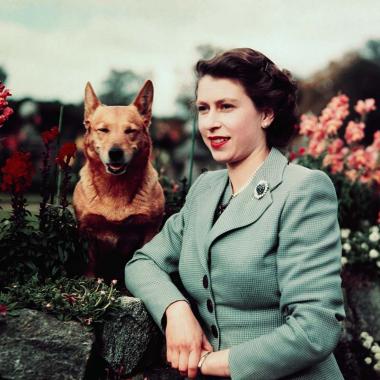Reina Isabel II perros