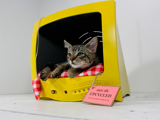 Cómo conseguir que tu gato salga en la tele