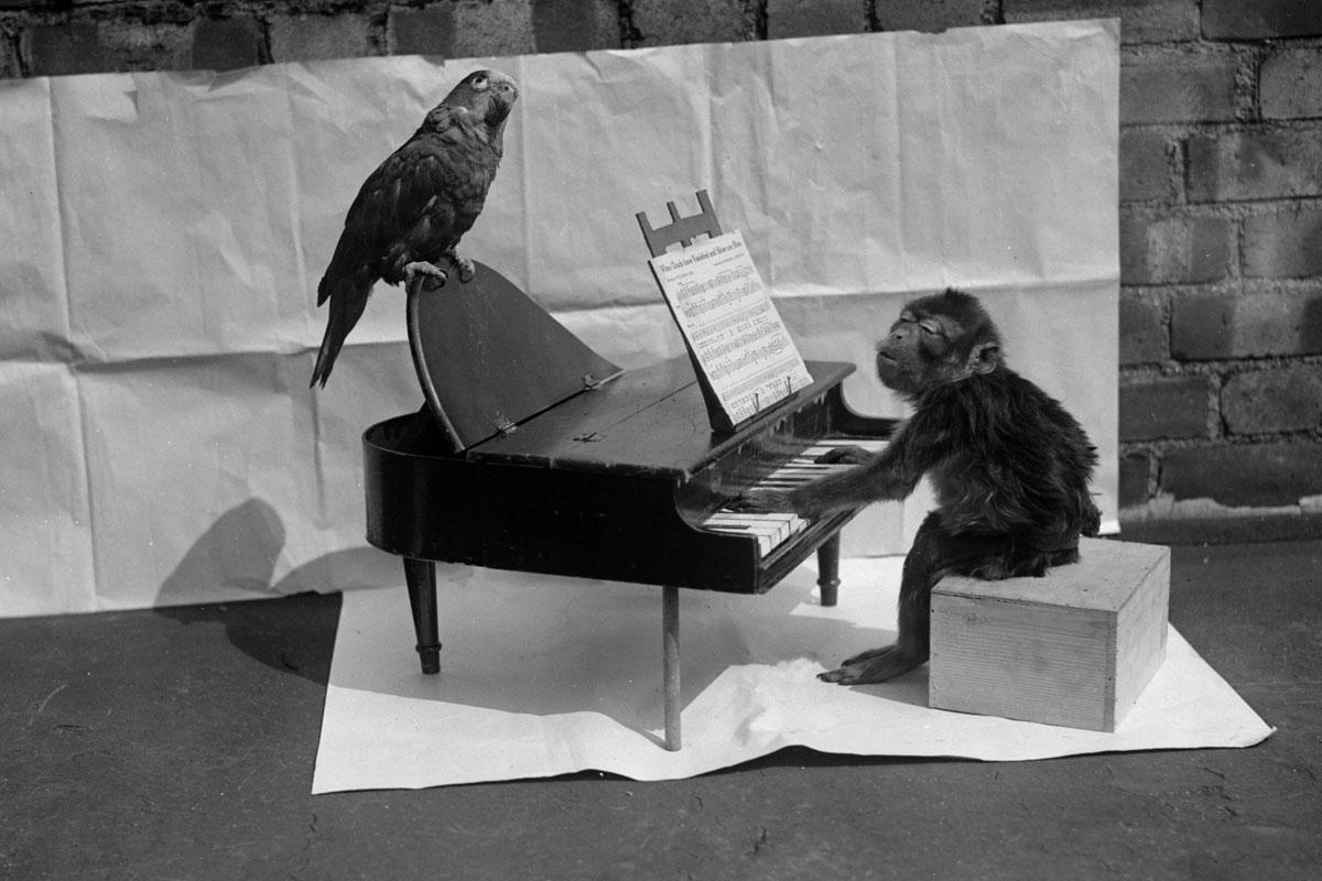 Los animalitos más monos del siglo pasado