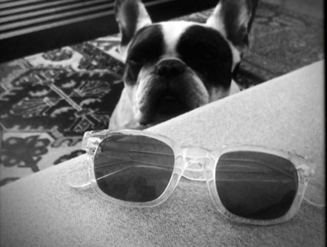 Jason Schwartzman gafas