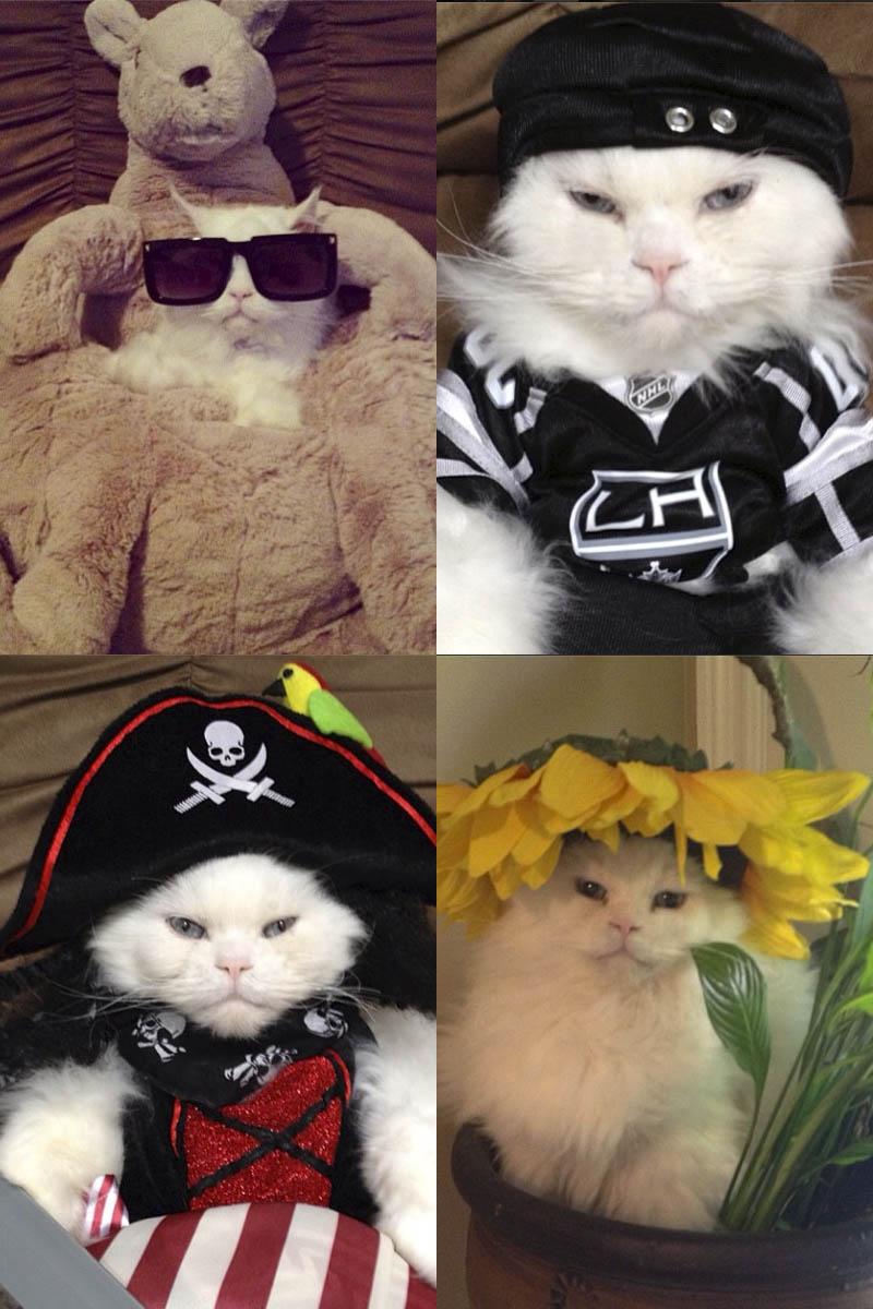 Las mascotas con mas glamour de la red