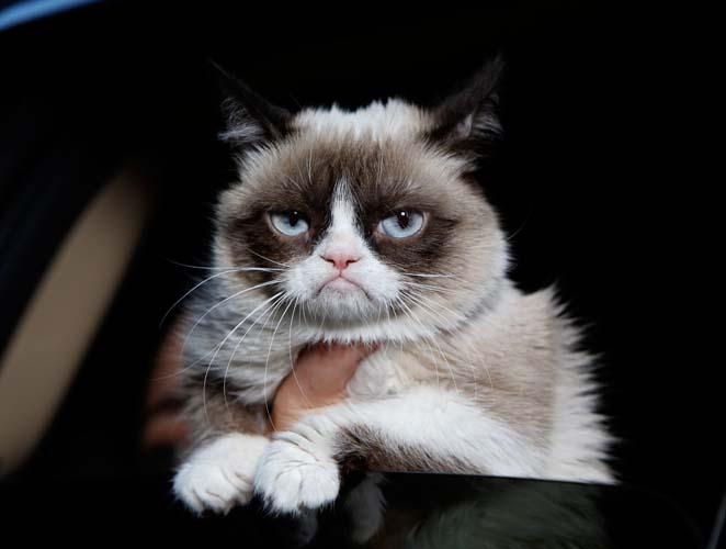 Datos curiosos sobre gatos