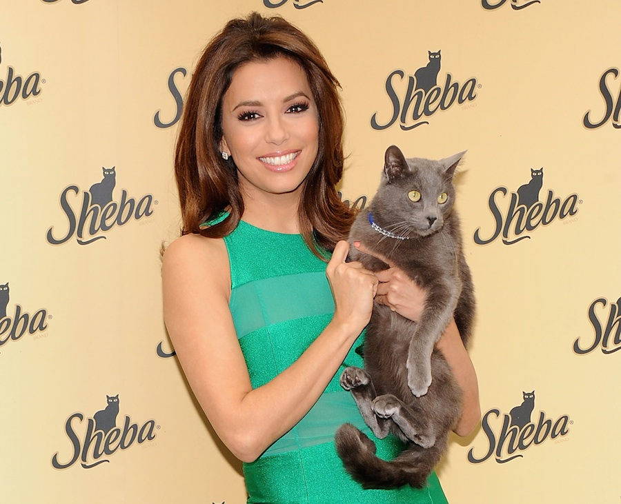 Eva Longoria posando con su gato.