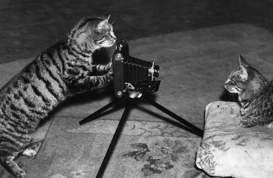 Los gatos son la mascota de internet.