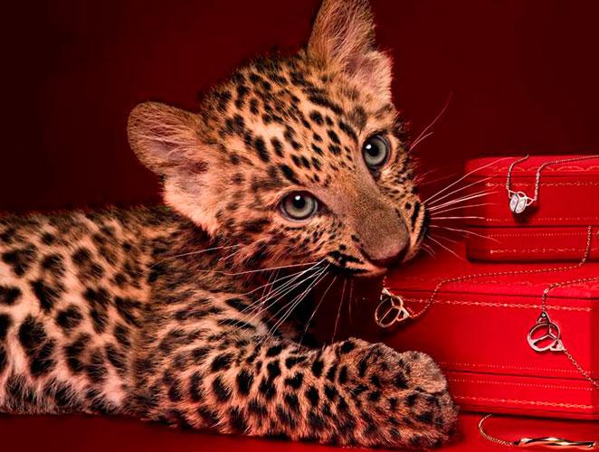 Cover animales moda