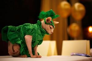 ¿Tu gato es el más mono? Entonces apúntalo al casting de United Bamboo