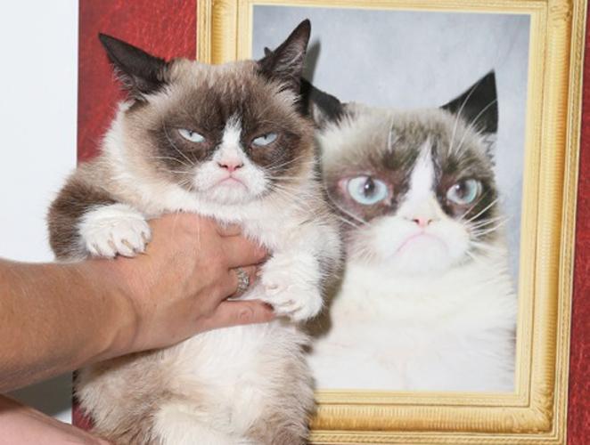 El día que los gatos probaron el Photoshop para Instagram